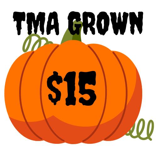 TMA Grown Pumpkin - $15
